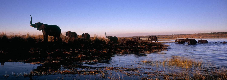Elephants Africa - travel