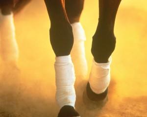Equine Images Magazine