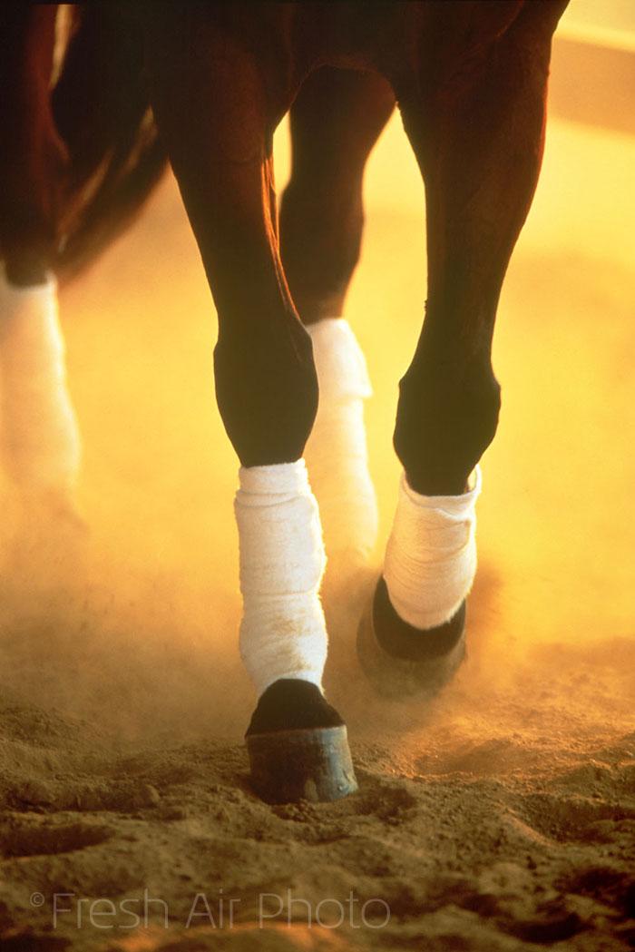 Race Horse Legs